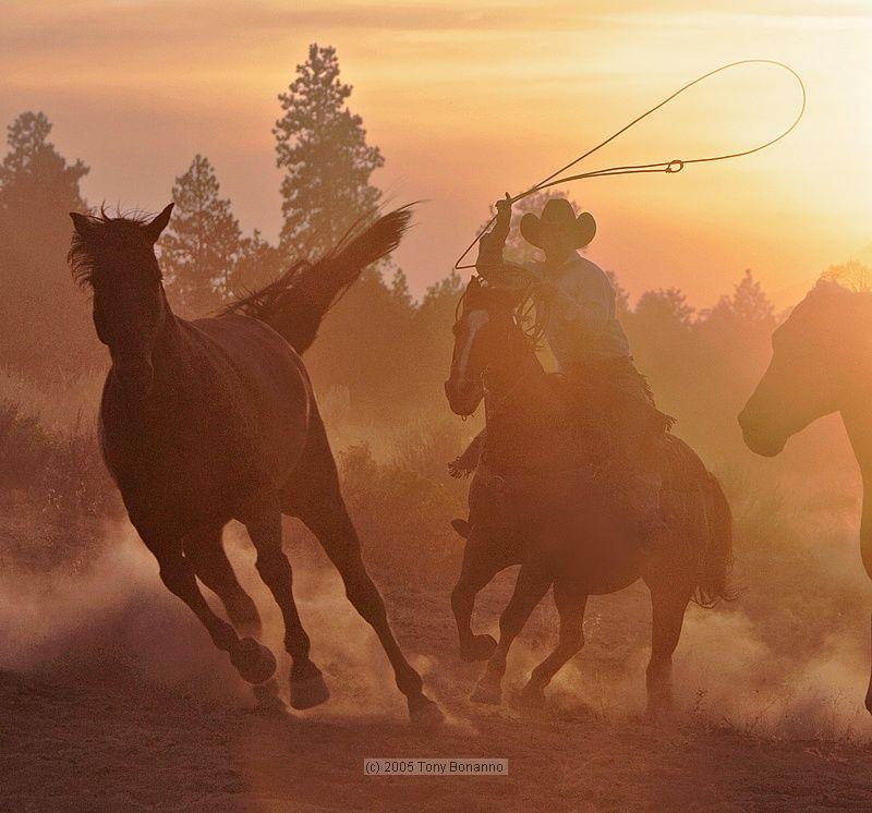 ловят диких лошадей