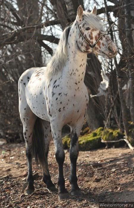 Купить лошадь