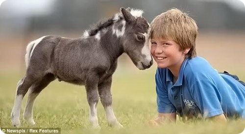 http://westernhorse.ru/images/porody/Poni/pon4.jpg